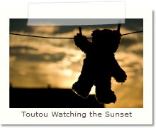 Toutou Watching the Sunset